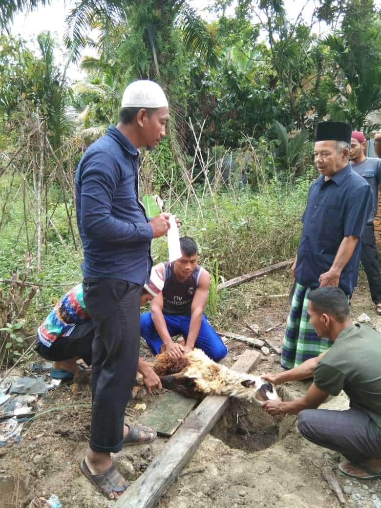 LAZ Panti Yatim Salurkan Hewan Qurban Ke Kabupaten Aceh Singkil