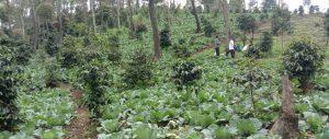 Panti Yatim Indonesia Salurkan Bantuan Ekonomi Produktif